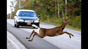 accidente de tráfico por un animal